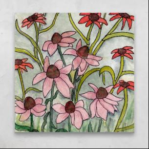 Echinacea & Co.